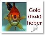 Gold(fisch)fieber
